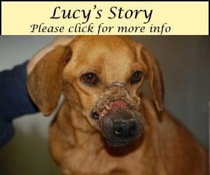 LucysStory