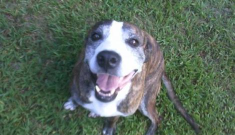 Happy Tails: The Story of Cassie