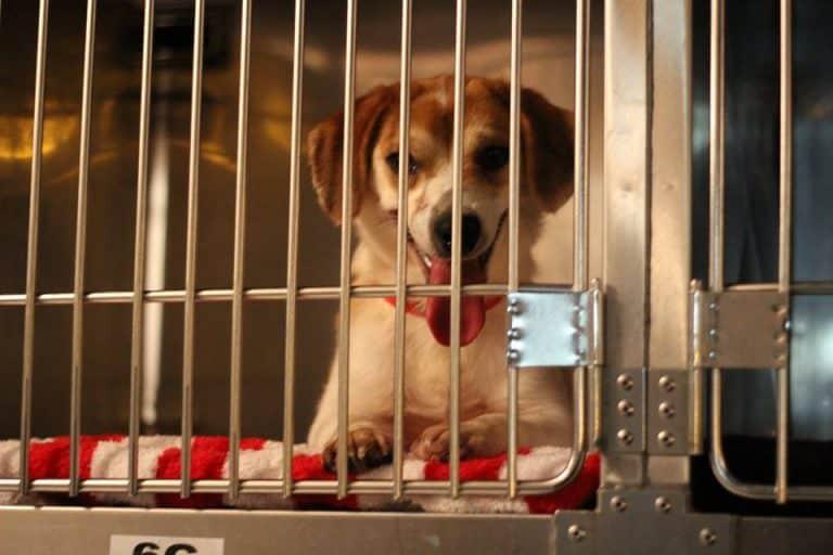 Underhound Railroad sends 39 dogs to Michigan