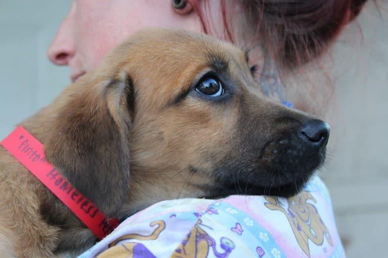Underhound Railroad Sends 35 Dogs to Wisconsin