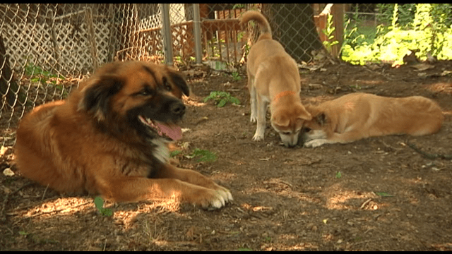 Dogs Rescued From Busy I20 Corridor