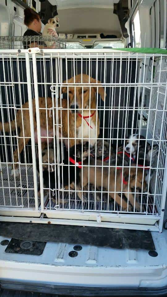 30 Lucky Dogs Transported to NY