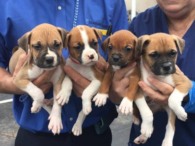 25 Lucky Dogs Sent To NY