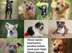 Help Us Save Heartworm Positive Dogs