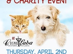4/2 – Homeless Pets Fundraiser at CosmoLava